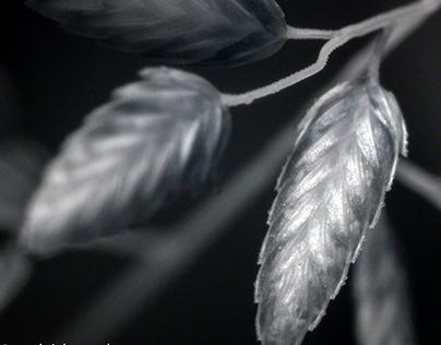 Seed Art IR Macros