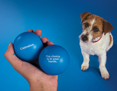 The Dog's Bollocks – Brand awareness campaign