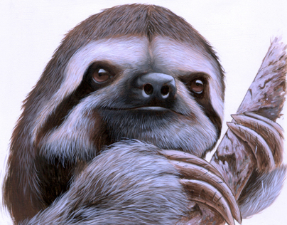 Sloths and Harpy Eagles