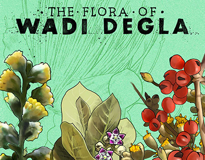 Illustrations of Wadi Degla Part 2: The Flora