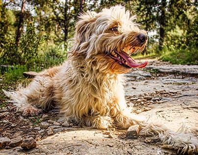Photography   Animal Portraits