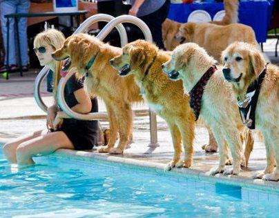 Golden Retriever Club of Los Angeles Rescue
