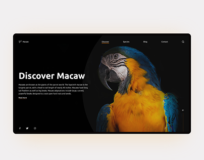 Discover Wild - Macaw Website Concept