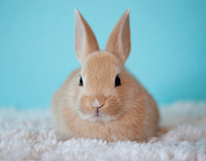 Three Common Diseases That Can Occur in Pet Rabbits