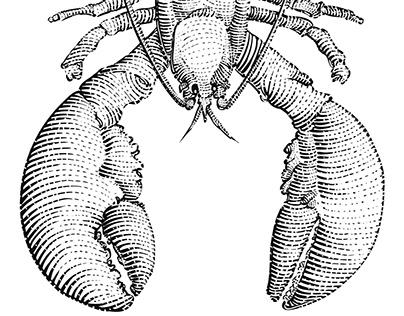 Lobster vector illustration