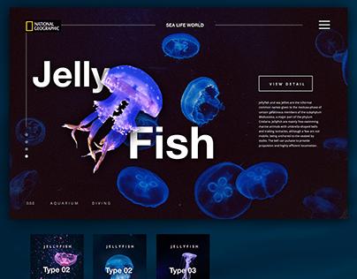 Jelly Fish Life