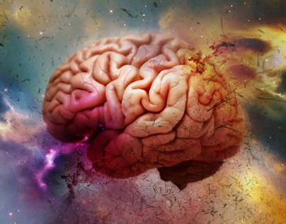 Brain in utero