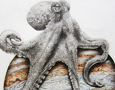 In which cephalopod are celestial