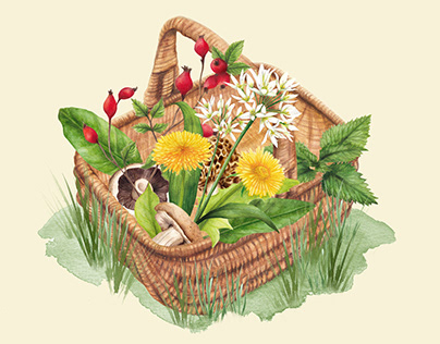 Watercolour illustration foraging basket of wild foods