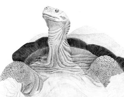 Reptiles, Birds & Mammals