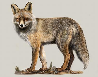 Scientific illustration: Mammals