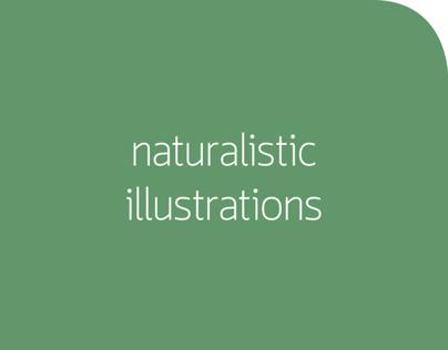 NATURALISTIC ILLUSTRATIONS