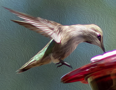 Hummingbirds in Oil Photography