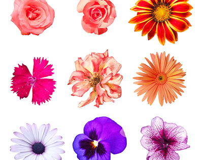 Free download set of flowers and roses collection