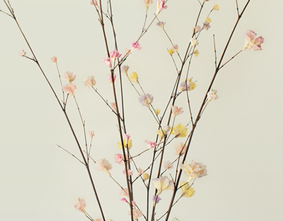 Photo Report- Paper Flowers