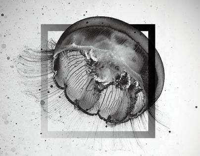 Breakthrough / Jellyfish