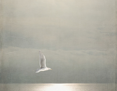 Where the Gulls Cry