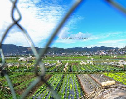 Baguio: Portraits and Landscapes