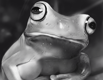 Digital Art - Frog