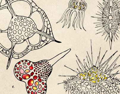 Radiolarian Shapes