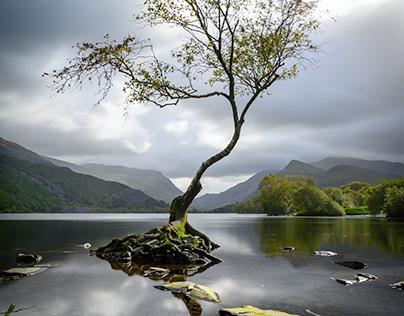 #62 Lonley Tree, Llyn Padarn, Llanberis