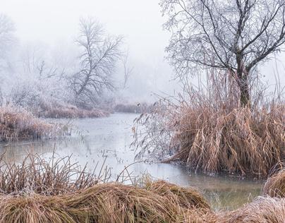 Silence Of Winter