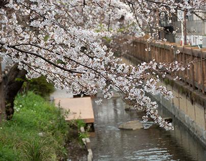 Sakura2021