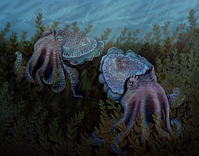 cuttlefish illustration