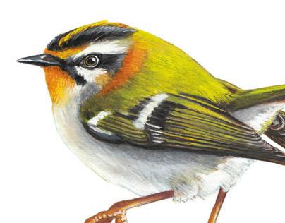 Birds - poster -Imland studio, France