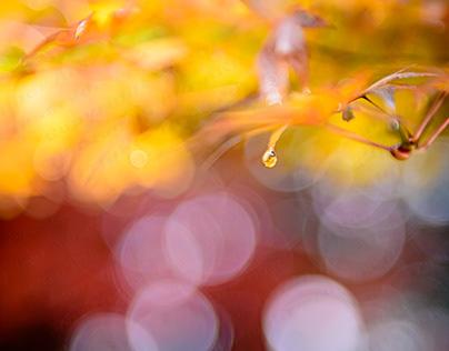 一粒の雫 ~A drop of water~