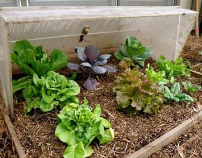 Gardening during cooler months