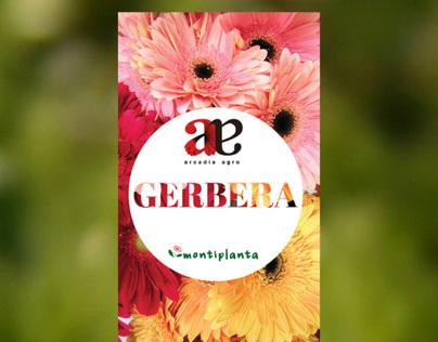 Arcadia Agro - Flower Brochure