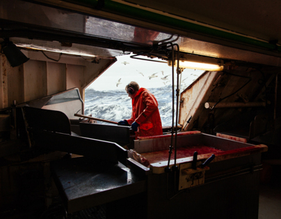 Icelandic Cod Fishing