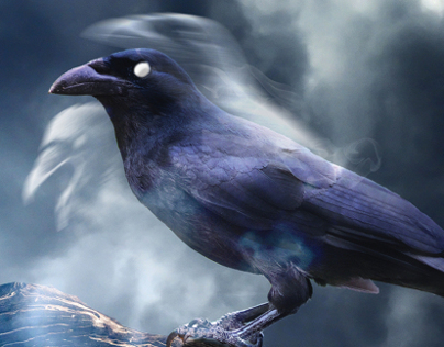 Curse of the Crow