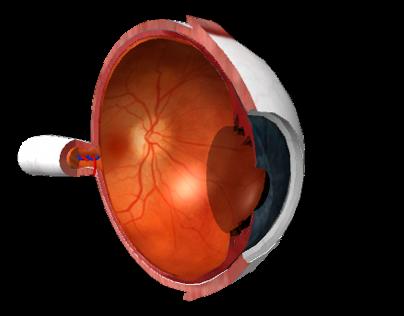 Human Eye Pathologies Haptic-based Multimedia