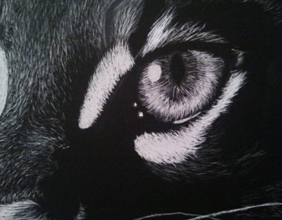 Ocelot on scratch board