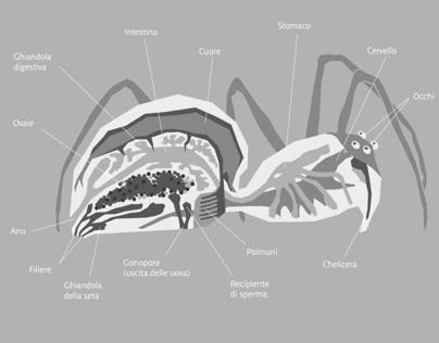 ARCA - Spider