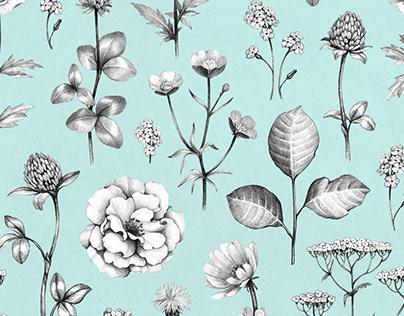 Wild flora. Illustrations and pattern design