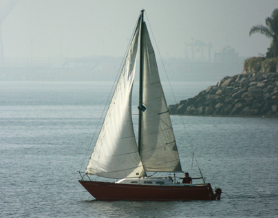 Birdies & boats