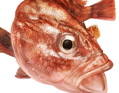 Fishhook package fish illustration
