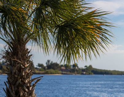 Florida Winter 2014