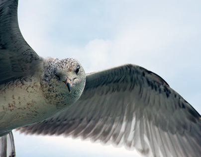 Bird Vogue