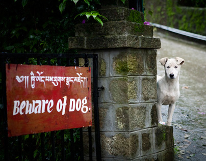 India :: Dogs & Cats