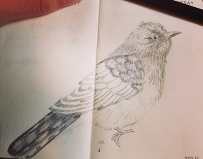 Diary sketches