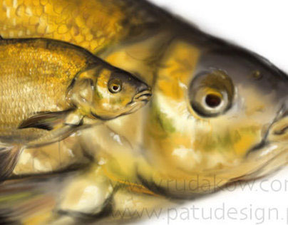 the bream drawing
