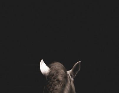 Untitled Horses