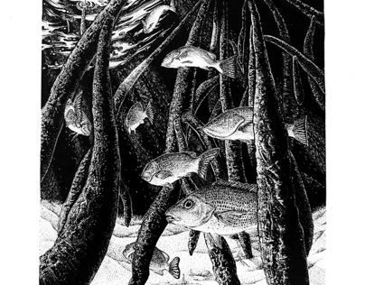 Under the Mangrove