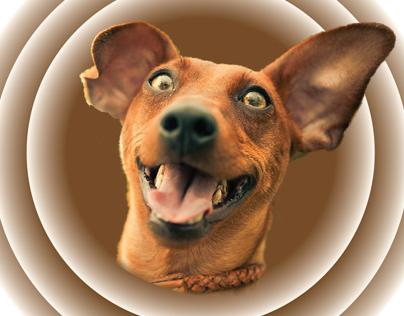 Brown Dog Foundation Rebranding