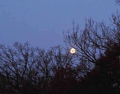 Light Source: Full Moon/Artificial