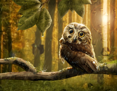 Owl in the Forest - Photoshop